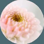 Rosenberger face&bodywellness inspiration flower